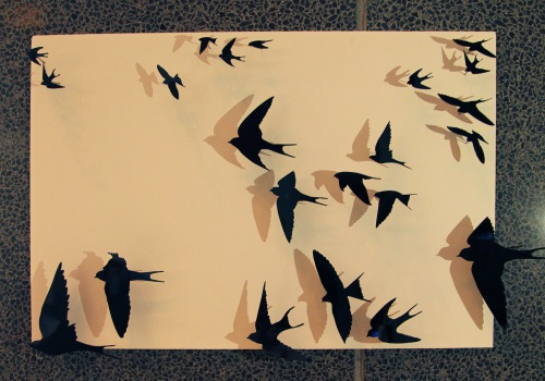 Perspex swallows